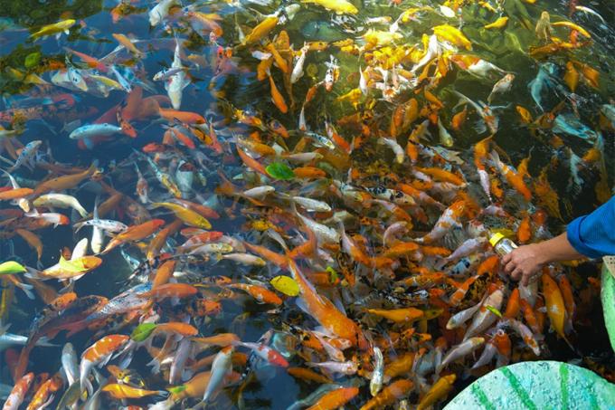 'Tất tần tật' về du lịch Thác YangBay (Nha Trang): Góc check-in, ăn gì, chơi gì?